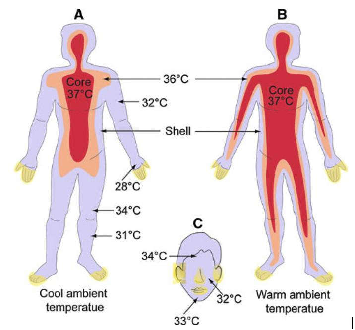 Body versus skin temperature